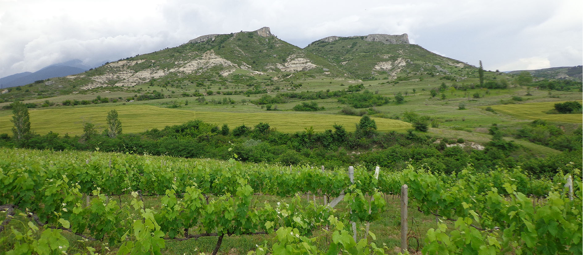 Damyanov Family Winery